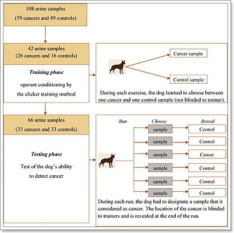Dogilike.com :: เจาะลึก!! ศาสตร์แห่งการดม สุนัขรับรู้กลิ่นโรคของคนได้อย่างไร