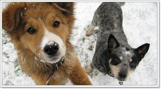 Dogilike.com :: อากาศหนาวจัด ระวัง! ภาวะอุณหภูมิร่างกายต่ำในสุนัข