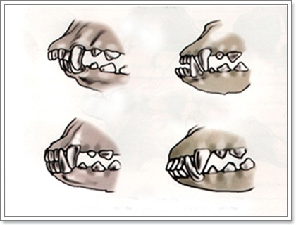 Dogilike.com :: 5 ความผิดปกติของสุนัข ที่ผู้เลี้ยง (มือใหม่) ไม่ควรมองข้าม