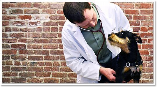 Dogilike.com :: โรคเกี่ยวกับต่อมลูกหมากของน้องหมา ที่หลายคนอาจไม่เคยรู้