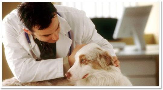 Dogilike.com :: 10 บทความ มุมหมอหมา ที่ได้ความสนใจมากสุดในรอบปี 2556