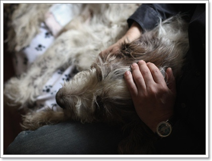 Dogilike.com :: เหตุผลที่น้องหมาถูกฉีดยาให้หลับไปตลอดกาล ...