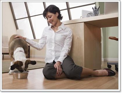 Dogilike.com :: 7 วิธีเทคแคร์หัวใจให้น้องหมา
