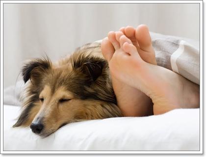 Dogilike.com :: ไขข้อข้องใจ ... จริงหรือไม่ ขน-เห็บ สุนัขเข้าไปในร่างกายคนได้?
