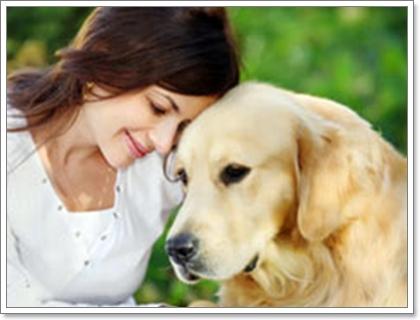 Dogilike.com :: การผ่าตัดเปลี่ยนไตในสุนัข