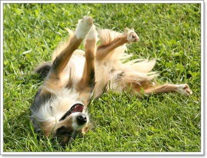 Dogilike.com :: กระเพาะบิดในสุนัข ถึงเสี่ยง ... แต่เลี่ยงได้