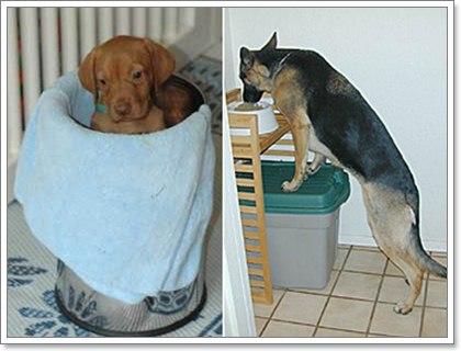Dogilike.com :: โรคหลอดอาหารขยายใหญ่กับอุปกรณ์ช่วยเหลือสุดแปลกของสุนัขป่วย