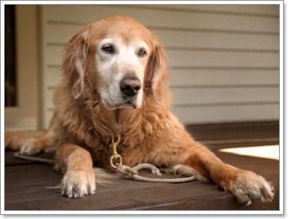 Dogilike.com :: มดลูกอักเสบเป็นหนอง โรคที่เจ้าของสุนัขควรรู้ไว้