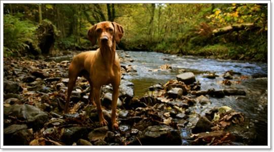 Dogilike.com :: ลายม์ (Lyme disease) โรคร้ายจากเห็บ ที่คนรักสุนัขต้องเฝ้าระวัง