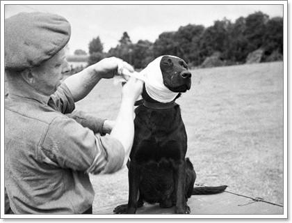 Dogilike.com :: เมื่อน้องหมามีบาดแผลจะดูแลอย่างไร