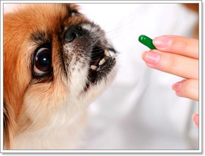Dogilike.com :: 5 วิธีรับมือกับโรคข้อเสื่อมในสุนัขสูงวัย
