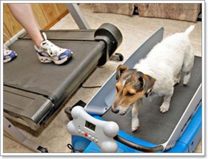 Dogilike.com :: พิชิตโรคเบาหวานในสุนัขด้วยหลัก 3 อ.