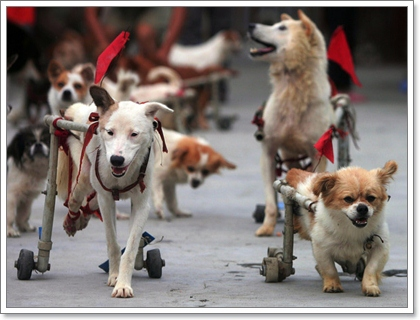 Dogilike.com :: 10 т├д├щ╥┬ ╖╒ш╖╙у╦щ╣щ═з╦┴╥╡щ═зб┼╥┬р╗ч╣ ═╤┴╛╥╡