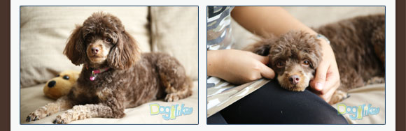 BOZZI, Bozzi, bozzi, แชมพูธรรมชาติ, แชมพูสมุนไพร, แชมพูธรรมชาติสำหรับสุนัข, ผู้เชี่ยวชาญด้านสมุนไพร, แชมพูสุนัข, ปราศจากสารเคมี, ปลอดภัยทุกสภาพผิว, แก้โรคผิวหนัง, ผลิตจากสมุนไพร, เหมาะกับทุกสภาพผิว, แชมพูสุนัขฟองน้อย, แชมพูหมาฟองน้อย, แชมพูธรรมชาติสำหรับหมา, ผลิตภัณฑ์แชมพูหมา, ผลิตภัณฑ์แชมพูสุนัข