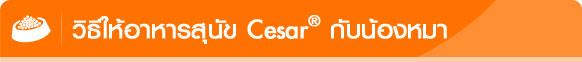 cesar, авИмАкХ╖╓грайь╒, мркрцйь╧я╒,CesarThailand