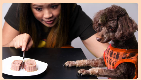 cesar, มื้อแห่งความสุข, อาหารสุนัข,CesarThailand