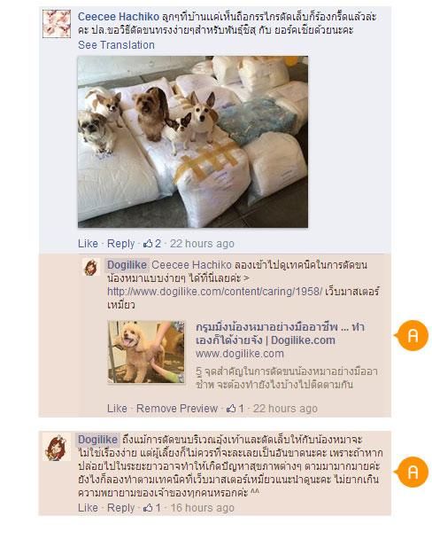 รายการออนไลน์, รูปแบบใหม่, ออนไลน์, dog close up zoom zoom, สัตวแพทย์, ผู้เชี่ยวชาญ, Live Chat, ปัญหา, หมอต้น, เล็บเท้า, ตัดขน