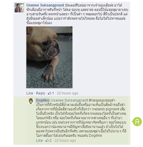 dog close-up, infographic, dog infographic, หมา, สุนัข, คัน, โรคไรขี้เรื้อนแห้ง, โรคกลาก, โรคภูมิแพ้น้ำลายหมัด, โรคผิวหนังที่เกิดจากเชื่อยีสต์, โรคภูมิแพ้จากการสัมผัส, โรคภูมิแพ้อาหาร