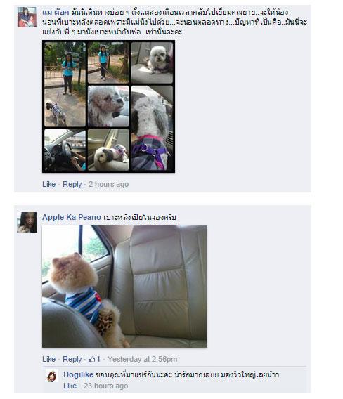 dog close-up, infographic, dog infographic, หมา, สุนัข,เดินทางโดยเรือ, ่เสื้อชูชีพ, การเดินทาง, รถยนต์