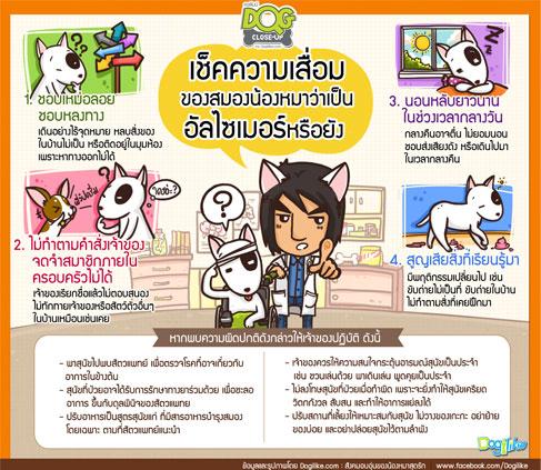 dog close-up, infographic, dog infographic, หมา, สุนัข, เหม่อลอย, หลงทาง, นอนหลับยาว, อัลไซเมอร์, ความจำเสื่อม, สมอง