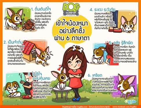 dog close-up, infographic, dog infographic, หมา, สุนัข, ตื่นเต้นดีใจ, เป็นเจ้าถิ่น, ไม่ไว้วางใจ, ยังไม่คุ้นเคย, ระแวง, ระวังภัย, กลัว, รู้สึกผิด, เครียด