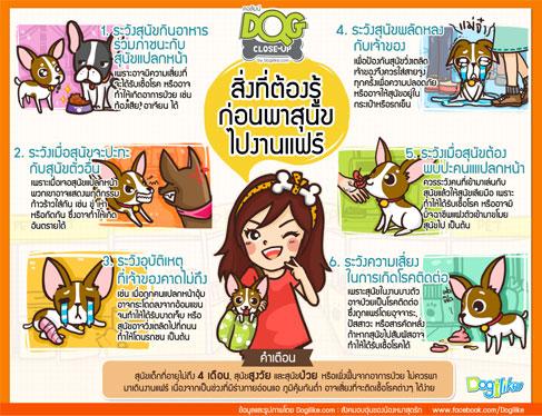 dog close-up, infographic, dog infographic, หมา, สุนัข, งานแฟร์, อุบัติเหตุ, ความเสี่ยง, คนแปลกหน้า