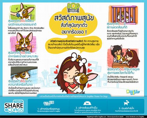 dog close-up, infographic, dog infographic, หมา, สุนัข, แชร์, sharefordogs, ให้กำลังใจ, สุนัขยากไร้, โอกาส, ช่วยเหลือ