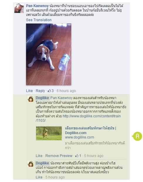 dog close-up, infographic, dog infographic, หมา, สุนัข, คุ้ยขยะ, ขับถ่ายไม่เป็นที่, กระโดดขึ้นที่นอน, กัดแทะสิ่งของ, ขุดสวน, ขโม