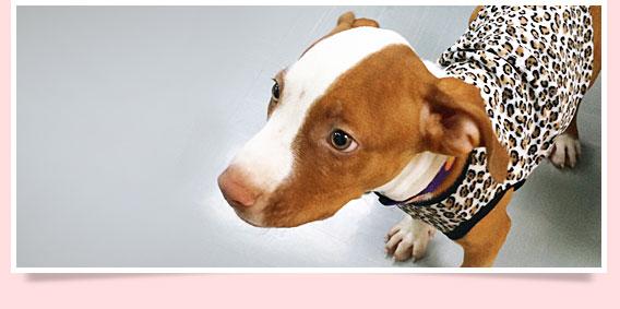 นัองหมา, สุนัข, โคดี้, น่ารัก,  การดูแล,เทคนิคการเลี้ยงดู, dog of the week 100