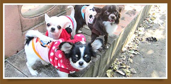 นัองหมา, สุนัข, มาการอง, น่ารัก,  การดูแล, เทคนิคการเลี้ยงดู, สุดป่วน , ตัวเล็กๆ จอมเขมือบ, dog of the week 91