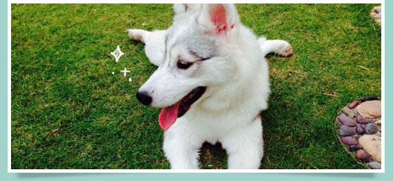 นัองหมา, สุนัข, น่ารัก, มายา, maya, dog of the week 97