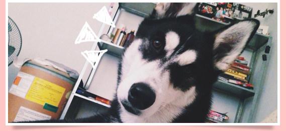 นัองหมา, สุนัข, น่ารัก, ธันวา, thanwa, dog of the week 98