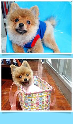 นัองหมา, สุนัข, ดีจัง, น่ารัก,  การดูแล,เทคนิคการเลี้ยงดู, dog of the week 99