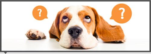 น้องหมา,สุนัข,พฤติกรรม,การฝึก,เทคนิค,กัดแทะสิ่งของ