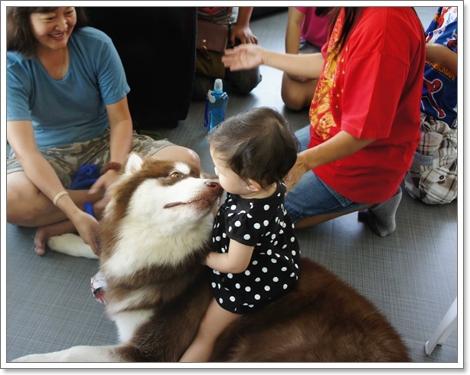 Dogilike.com :: สัมภาษณ์  Alaskan Club Thailand รวมพลคนรักหมายักษ์