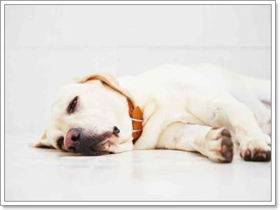 Dogilike.com :: เมื่อร่างไร้วิญญาณของน้องหมากลายมาเป็น ... อาจารย์ใหญ่