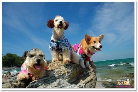 Dogilike.com :: สัมภาษณ์ ครอบครัวไกด์น้องหมา DOGHALL