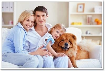 Dogilike.com :: เคล็ดลับกำจัดกลิ่นสุนัขไม่ให้ติดห้อง