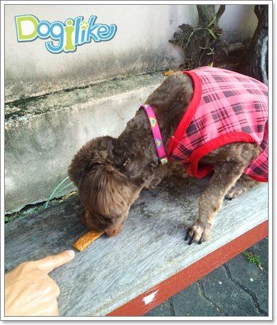 Dogilike.com :: Review : Doggie n Cookie รสฟักทองและเบคอน