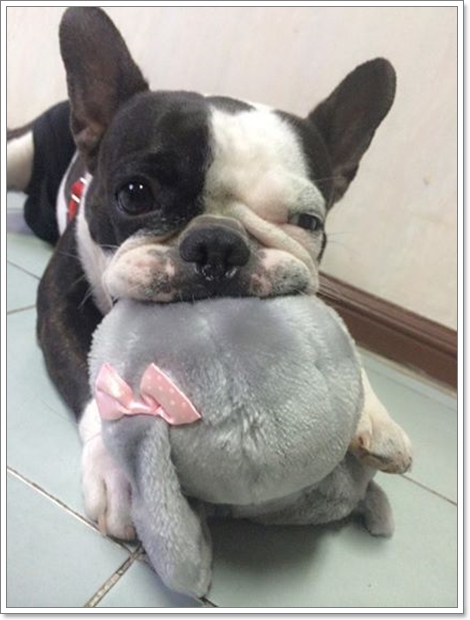 Dogilike.com :: ติดตามเรื่องราวของ มะลิ ... เมื่อน้องหมาขอวิ่งมินิมาราธอน