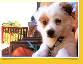 นัองหมา, สุนัข, ดิออร์, น่ารัก,  การดูแล,เทคนิคการเลี้ยงดู, dog of the week 101
