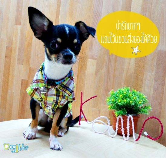 Dogilike.com :: ป้ายชื่อน้องหมาเอนกประสงค์