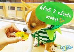 Dogilike.com :: พายฟักทองหน้าฉ่ำ