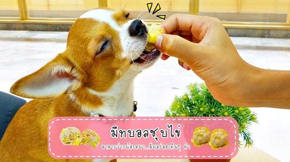 Dogilike.com :: มีทบอลชุบไข่