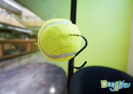 Dogilike.com :: บอลจุ๊บกระจก