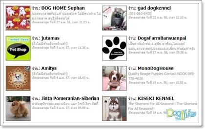 Dogilike.com :: เรื่องต้องรู้! ข้อควรระวังและการเลือกซื้อน้องหมาผ่านอินเตอร์เน็ต
