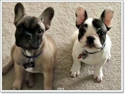 Dogilike.com :: ฮอตฮิต! 10 สายพันธุ์น้องหมา ถูกพูดถึงมากที่สุดปี 2014