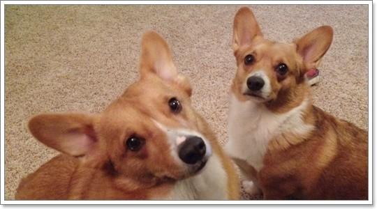 Dogilike.com :: 6 เรื่องจริงสุดสะเทือนใจ ที่เกิดขึ้นกับน้องหมาขาสั้น!