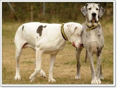 Dogilike.com :: ถึงน้องหมาตาบอด...แต่ก็ใช้ชีวิตอย่างมีความสุขได้!