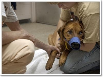 Dogilike.com ::  10 เรื่องจริงของน้องหมาในเมืองที่เราอาจไม่เคยรู้ แต่ต้องรู้!